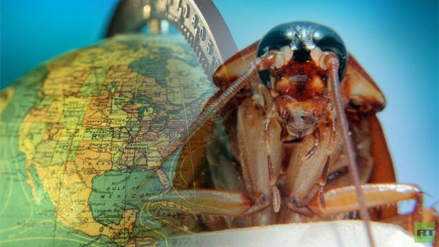 العلماء يكتشفون وطن الصراصير الأول