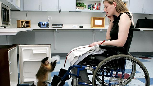 الولايات المتحدة...القردة تساعد ذوي الاحتياجات الخاصة