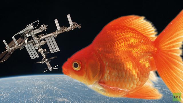 ديدان وأسماك زينة بضيافة المحطة الفضائية الدولية