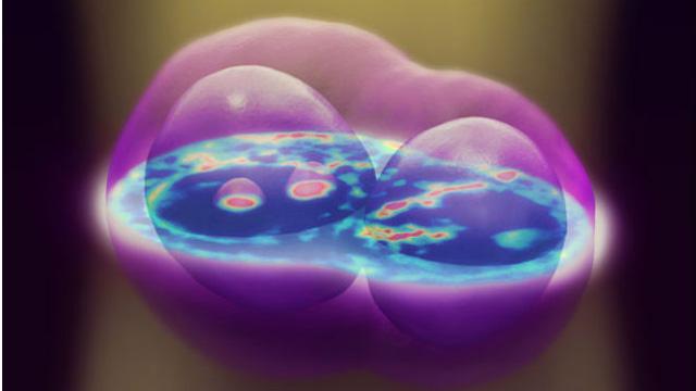 ابتكار يتيح رؤية الخلية الحية من الداخل