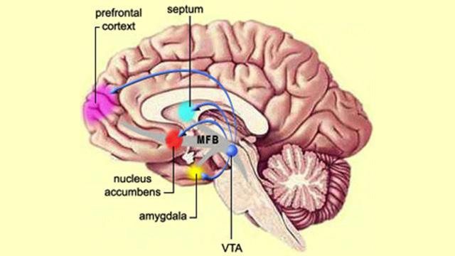 العلماء يكتشفون الفرق بين دماغي الانسان والحيوان