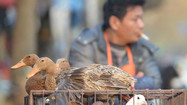 وفاة امرأة في الصين جراء إصابتها بسلالة جديدة لأنفلونزا الطيور