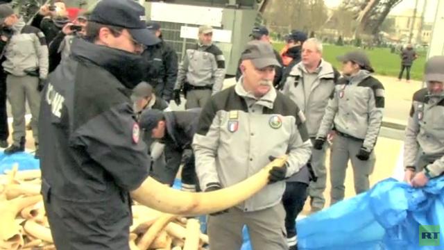 بالفيديو...فرنسا تدمر 3 أطنان من العاج المهرب