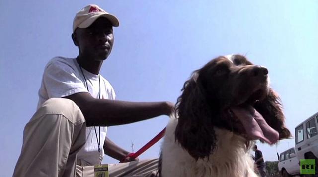 بالفيديو.. كلاب مدربة على إيجاد المتفجرات تنقل إلى جنوب السودان