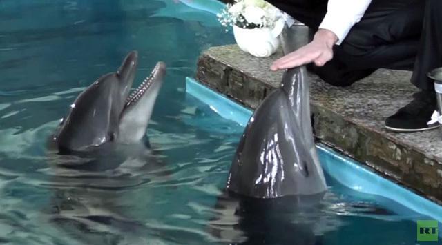 بالفيديو.. حفلة زواج لدلفينين تقام في شبه جزيرة القرم