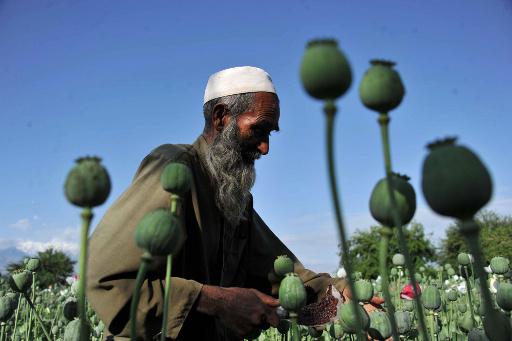 كابولوف: ثلث المخدرات الافغانية تصل او تعبر روسيا