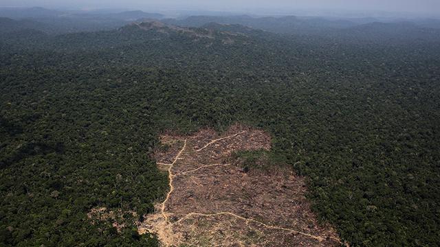 اكتشاف أنواع جديدة من الحيوانات والنباتات في غابات الأمازون