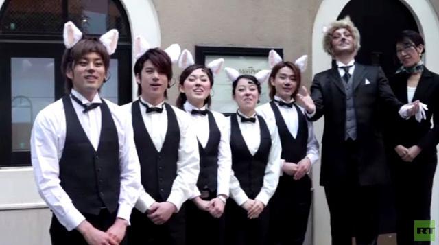 بالفيديو.. يابانيون يحتفلون بعيد القط العالمي