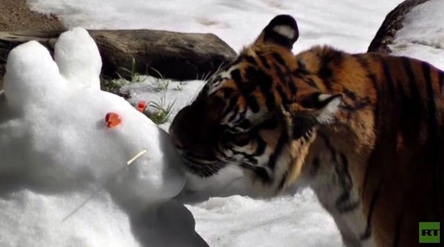 بالفيديو.. الثلج يسعد الحيوانات المقيمة في لوس أنجلوس