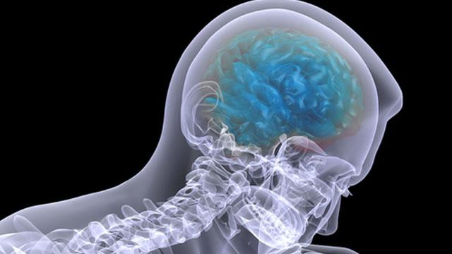 البصل ينظف ويجدد خلايا الدماغ