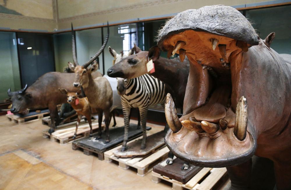 صور من المتحف الملكي في بروكسل الذي أصبح رمزا لاستعمار أفريقيا