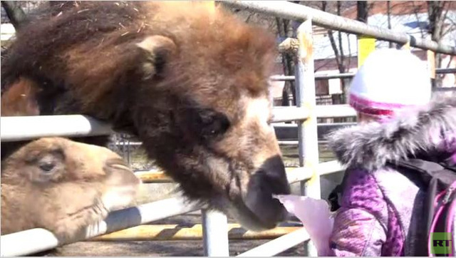 بالفيديو.. حيوانات مدينة خاركوف تصبح ضحية الأزمة الأوكرانية