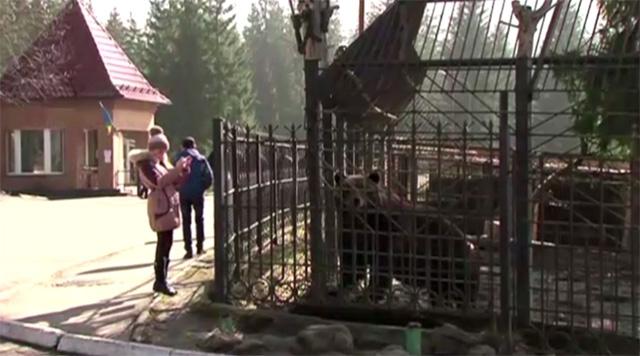 بالفيديو .. دببة الرئيس الأوكراني تقبع في أقفاصها