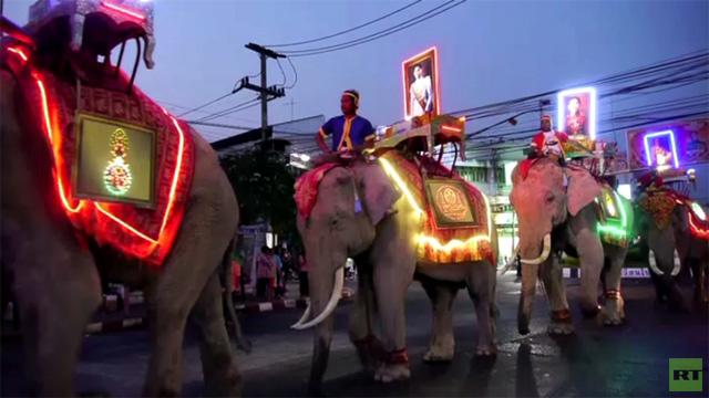 فعاليات عيد الفيل القومي تجري في تايلاند (فيديو)