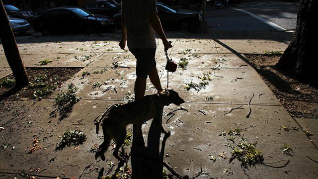 مواطن روسي يعضّ كلب حماية