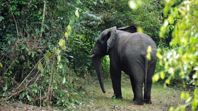 مصرع سائح بريطاني تحت أقدام فيل في أدغال الهند