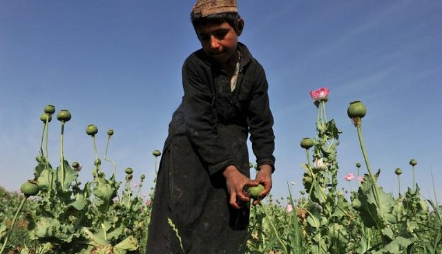 موسكو: قرار واشنطن تضييق التعاون مع روسيا يصب في مصلحة عصابات المخدرات الأفغانية