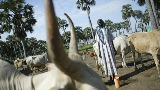 منظمة الأمم المتحدة للأغذية والزراعة تحذر من مجاعة قد تجتاح السودان