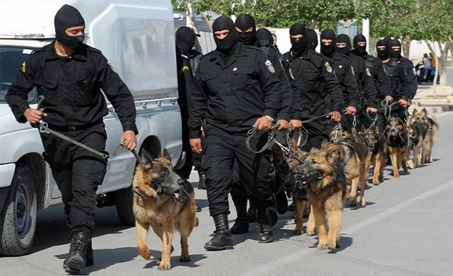 الأمن التونسي يلقي القبض على خلية تمويل مسلحين متحصنين بجبل الشعانبي