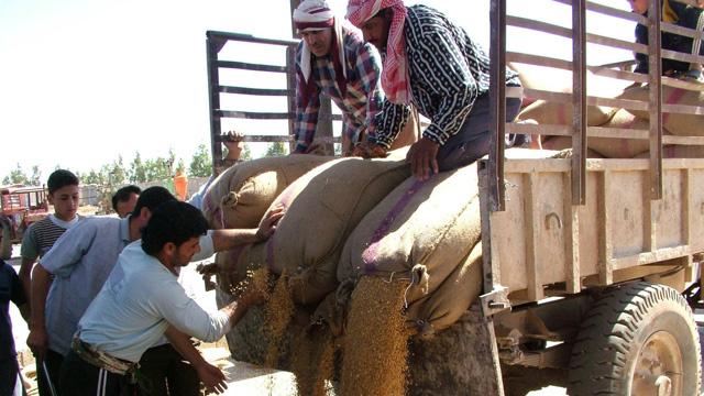 فاو: محصول القمح السوري سينخفض إلى 1.97 مليون طن في 2014