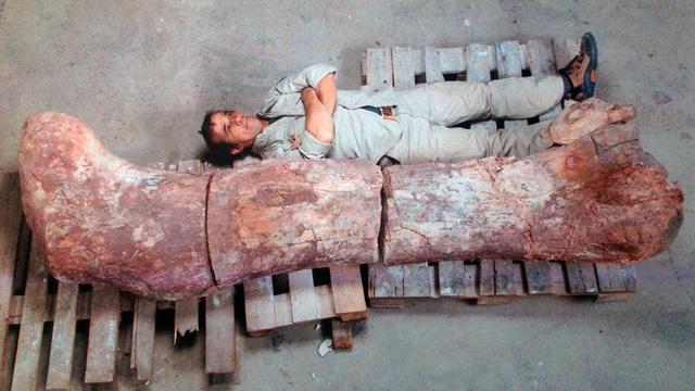 العثور على مقبرة للديناصورات في الأرجنتين