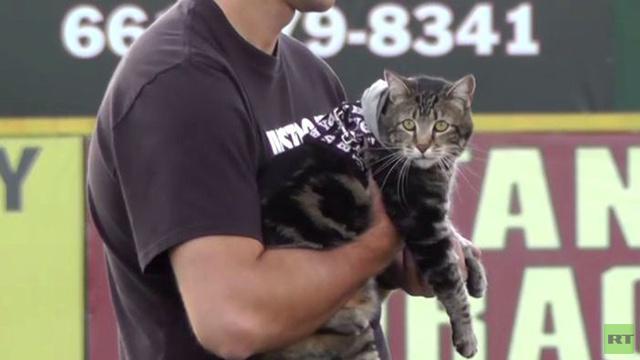 بالفيديو.. تكريم القطة الشهيرة التي أنقذت طفلا من كلب