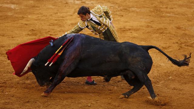 مدريد تلغي مهرجانا لمصارعة الثيران بعد إصابة 3 مصارعين