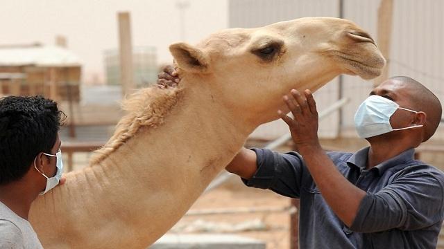 كورونا يتسبب بوفاة 179 حالة في السعودية