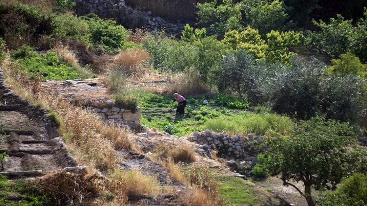 اليونيسكو تدرج قرية بتير الفلسطينية على لائحة التراث العالمي