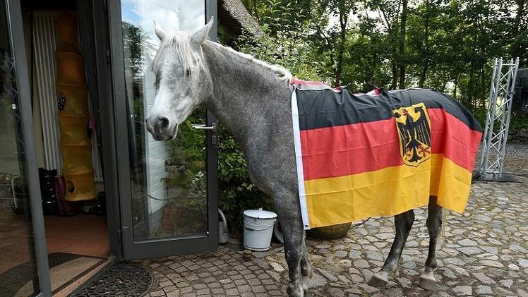 الحصان العربي نصار.. مباراة ألمانيا والولايات المتحدة ستنتهي بالتعادل 1-1