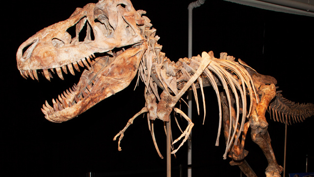 السجن لأمريكيّ حاول تهريب هيكل عظمي لديناصور