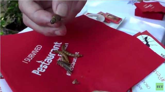 بالفيديو... حشرات مطبوخة تقدم في أحد مطاعم واشنطن