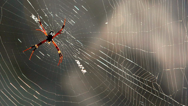 خيوط العنكبوت مليئة بالأسرار