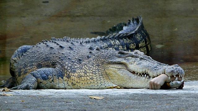 العثور على ما تبقى من سائح استرالي في معدة تمساح