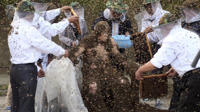 مليون نحلة وألفي لسعة لدخول غينيس (فيديو)