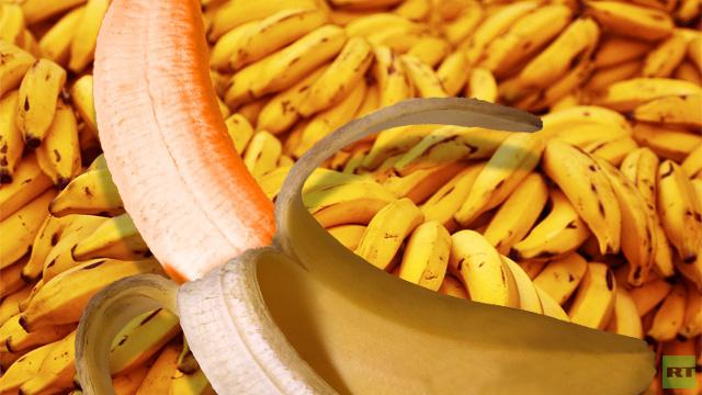 الموز المعدل وراثيا يخلص أفريقيا من نقص الفيتامينات