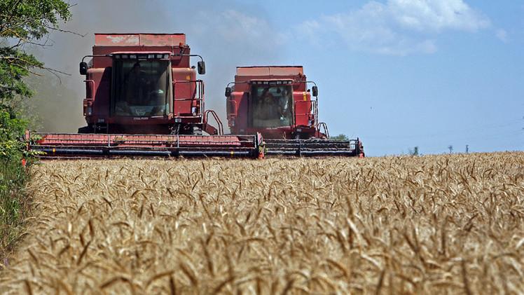 روسيا صدرت 25.3 مليون طن من الحبوب في الموسم الزراعي الماضي