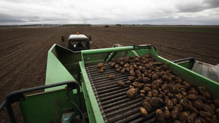 بيلاروس تحظر استيراد البطاطا الأوكرانية