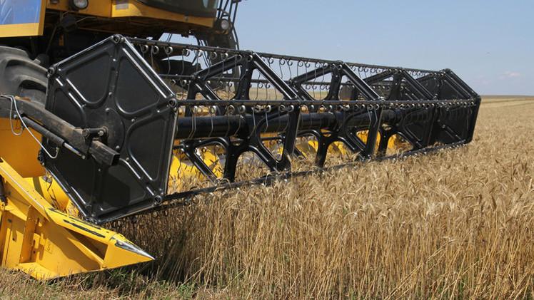محصول الحبوب الروسي هذا الموسم يصل إلى 20.1 مليون طن حتى منتصف يوليو