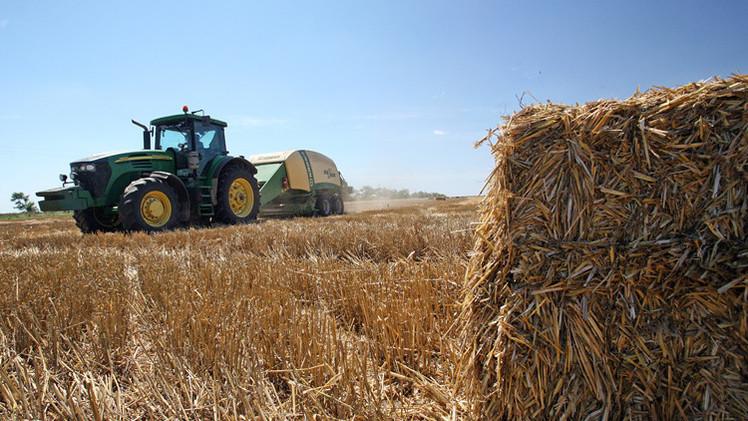 تجار: العراق يشتري 100 ألف طن من القمح الصلد من روسيا وكندا