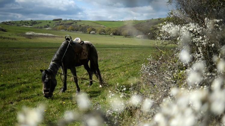 أكل حصانه كي لا تصادره الشرطة