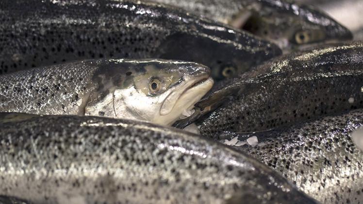 النرويج تخسر الملايين بعد حرمانها من دخول سوق المأكولات البحرية في روسيا