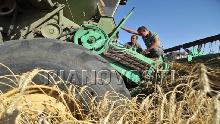 محصول الحبوب الروسي يبلغ 55.8 مليون طن  منذ بداية الموسم