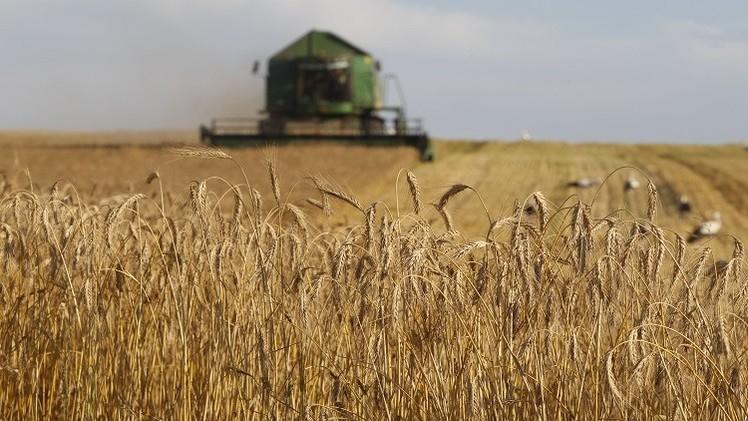 بوتين: روسيا ستزيد حجم صادراتها من الحبوب إلى مصر بأكثر من 60%