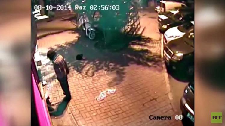 فيديو صادم من تركيا لامرأة تركل قطة وصغيريها بقسوة حتى الموت