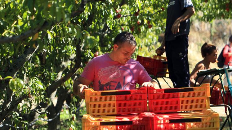 المفوضية الأوروبية تخصص 125 مليون يورو لتعويض المزارعين المتضررين من الحظر الروسي