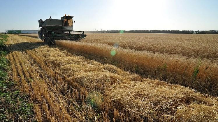 محصول الحبوب الروسي سيتجاوز 100 مليون طن هذا الموسم
