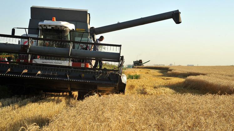 محصول الحبوب الروسي يبلغ 77 مليون طن منذ بداية الموسم