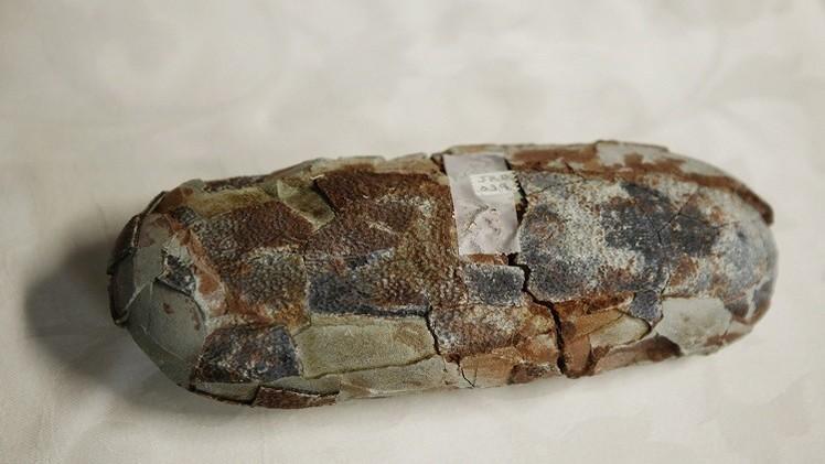 علماء متحجرات يعثرون على بيضة متحجرة لسمكة قرش يبلغ عمرها 310 ملايين عام