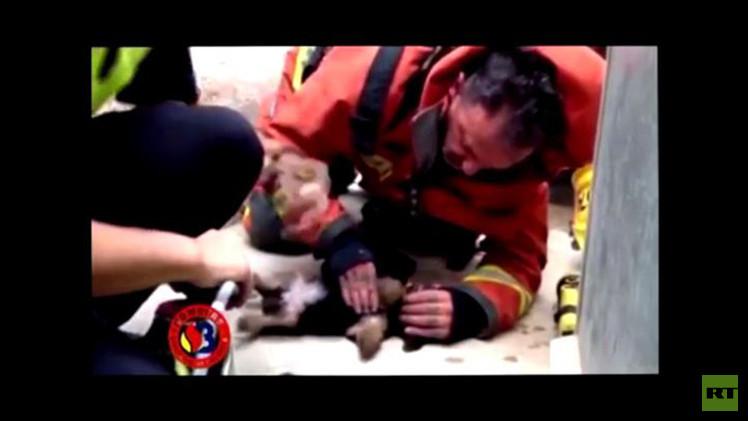 بالفيديو.. رجال الإطفاء ينقذون حياة جروين صغيرين بطريقة إنعاش القلب